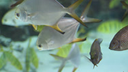 Stock Video Footage of Assorted Tropical Fish in Aquarium 2