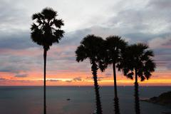 Palm trees at sunset on the andaman sea in thailand Stock Photos