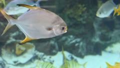 Assorted Tropical Fish in Aquarium Stock Footage