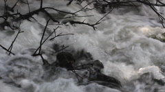 Fast whitewater closeup with bare tree branches - stock footage
