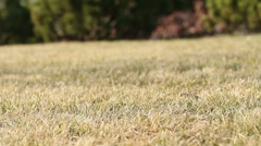 Slider Grass Background 2 Stock Footage
