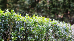 Slider Green Bush 4 Stock Footage