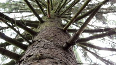 Stock Video Footage of The Tree Foliage Looking Up