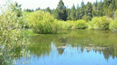 Secluded Deep Forest Pond Stock Footage
