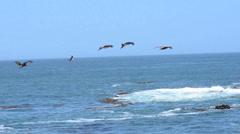 Peru Birds flying Stock Footage