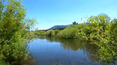 Secluded Forest Pond - stock footage