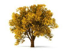 3d autumnal tree Stock Photos