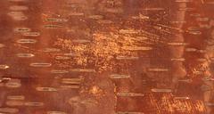 Stock Illustration of aged brown inner side of birch bark