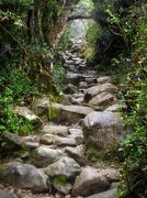 Trail at Mount Kinabalu in Sabah, Malaysia Kuvituskuvat