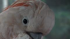 Parrots, Birds, Animals, Wildlife, Nature Stock Footage