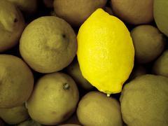 Special lemon Stock Photos