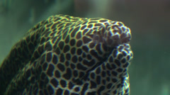 Eels, Serpents, Sealife, Underwater Stock Footage