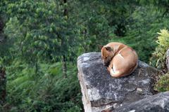 Lonely feel dog Stock Photos
