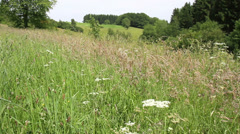 Meadow on the Belgian countryside in summer day. Stock Footage