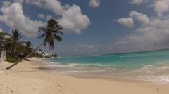 palm tree on the beach - stock footage