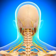 Anatomy of nervous system with human skull - stock illustration