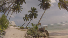 Palm trees on the beach bus stop Stock Footage