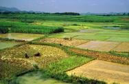 Stock Photo of generic chinese rice fields