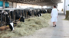 Back view to woman in white robe walks on stall and looks cows Stock Footage