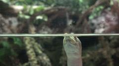 Softshell Turtles, Tortoises, Reptiles, Animals, Wildlife Stock Footage