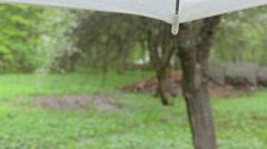 Rain drops fall corner umbrella blur bloom garden trees petals Stock Footage