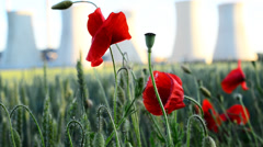 Field poppy and power station,locked down,shallow depth of field Stock Footage
