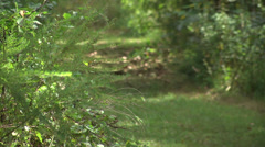 walking trail telephoto shot - stock footage