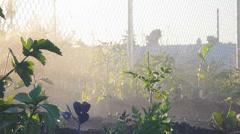 Watering Vegetables in Community Garden - stock footage