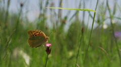 Brown butterfly flies from meadow in slow motion Stock Footage