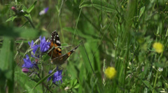 Colorful butterfly flies super slow motion of meadow in spring Stock Footage