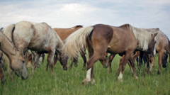 Variegated herd of horses slowly goes on a pasture Stock Footage