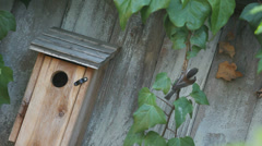 Chickadee brings food to nest box Stock Footage