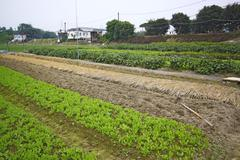 Cultivated land in a rural - stock photo