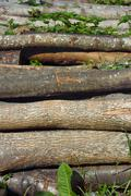 heap of firewood logs - stock photo