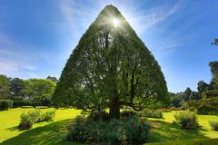 Triangular tree - stock photo