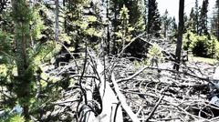 Environmental Damage of the Forest Stock Footage