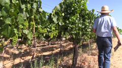 Farm, Vineyard owner, tablet and walking Stock Footage