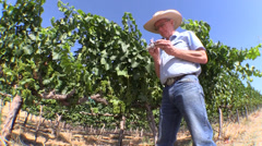 Farm, Vineyard owner, grapevine Stock Footage