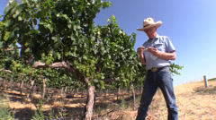 Farm, Vineyard owner ,blue skies testing Stock Footage
