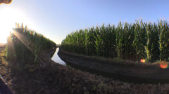 Farming ,drought and water, ditch water Stock Footage