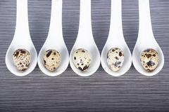 Group porcelain spoons and quail eggs on a gray background - stock photo