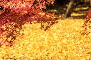 Stock Photo of Autumn season,The leave change color of red in Tample japan.