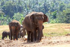 Elephants in park - stock photo