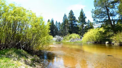Beautiful Forest Truckee River Stock Footage