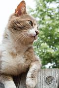 Brown and white cat sitting on a wooden fence - stock photo