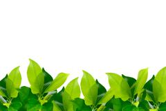 Green young leaves border Stock Photos