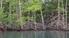 Passing shot of mangrove swamp Stock Footage