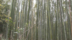 Sagano bamboo forest Stock Footage