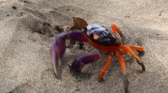 Halloween crab moving along in the sand Stock Footage