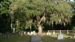 Mossy oak tree cemetery Stock Footage
